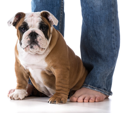 60a89a47bec5 3 Months Old Animal Stock Photos. Royalty Free 3 Months Old Animal ...