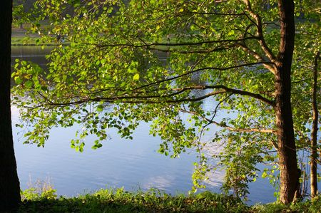Branches of an alder growing on coast of lake Stock Photo