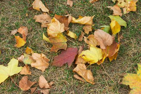 Red and yellow leaves of a maple and linden fallen to a grass