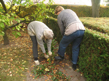 Two generations helping each other in the fall garden.