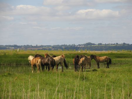 Horses in the meadow just behind the beach photo