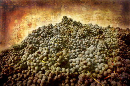 Artistic work of my own in retro style - Postcard from Italy. - New harvest - Piedmont. Stock Photo - 1943435
