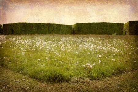 simplified: Artistic work of my own in retro style - Postcard from Denmark. - Hedges and meadow.