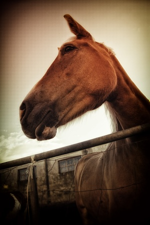 Beautiful Italian mare in pen - the region of Basilicata, Italy. photo