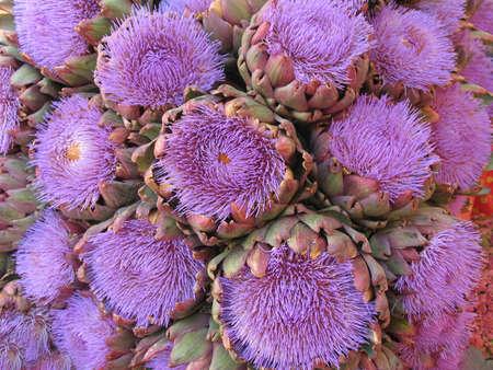 Artichoke flowers Stock Photo