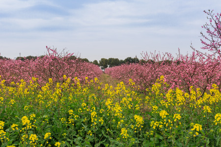 campestris: beautiful field of flowers