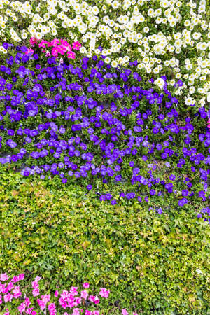 vertica: colourful flowers
