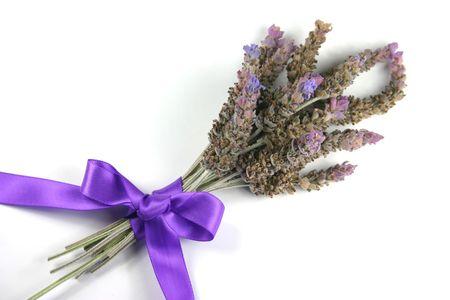 satin ribbon: Fresh lavender posy tied with purple satin ribbon against white background