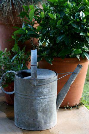 jardineras: vieja lata de riego entre los potes en el jard�n Foto de archivo