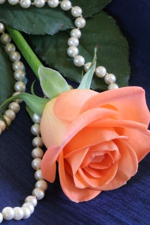 Close up of apricot colored rose with pearl necklace photo