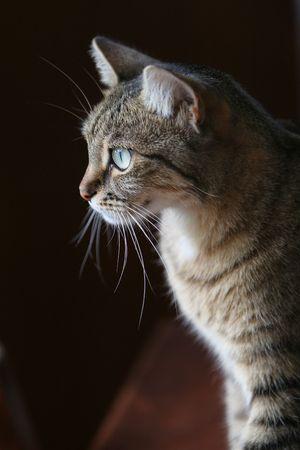 window light: inside portrait of tabby cat by window light Stock Photo