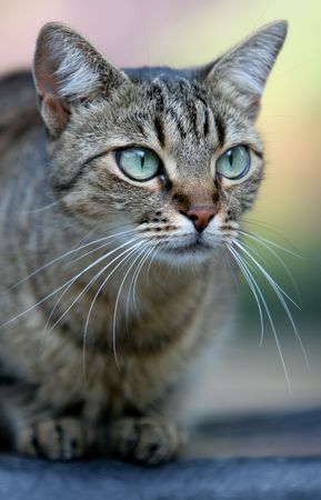 close up portrait of domestic cat with unusually large eyes photo