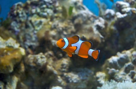 Tropical marine fish photo