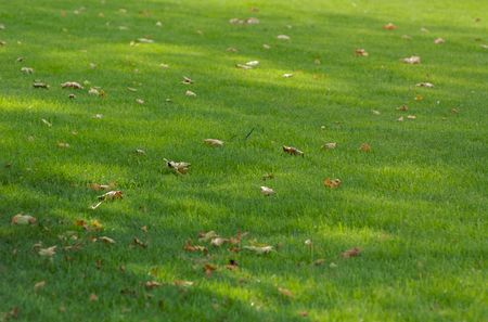 green grass with leaves