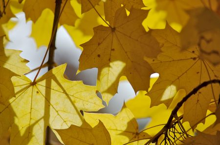 autumnal leaves in sun rays