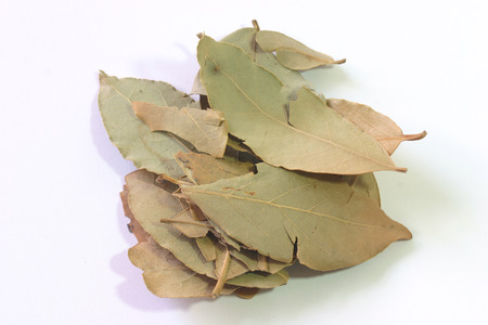 Dry laurel leaves Stock Photo - 1612482