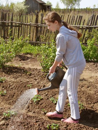 adolescent girl watering at the vegetable garden                                photo