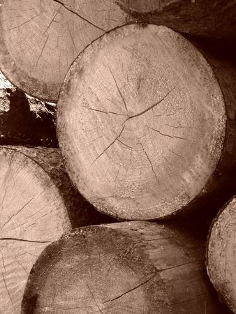 sawed: sawed logs pile cutting edges view sepia toned                                Stock Photo