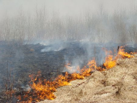 bush fire: burning dry grass at the spring field                                 Stock Photo