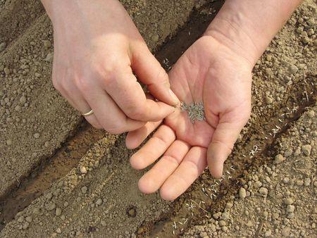 mujer de las manos la siembra de semillas Foto de archivo - 4867102