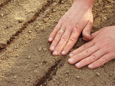 mujer de las manos la siembra de semillas Foto de archivo - 4885838