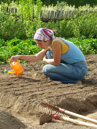 woman watering vegetable bed for sowing seeds                                  photo