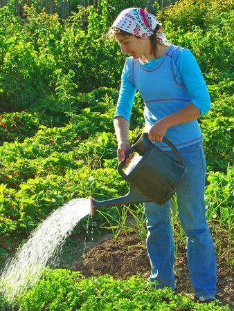 woman watering vegetable bed at the rural farm                                photo