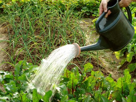 hands with watering can in action                                Stock Photo