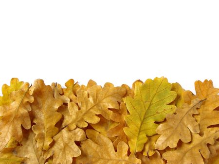oak leaves border as design element with copy space                                photo