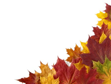 dry autumnal leaves corner with copy space                                photo