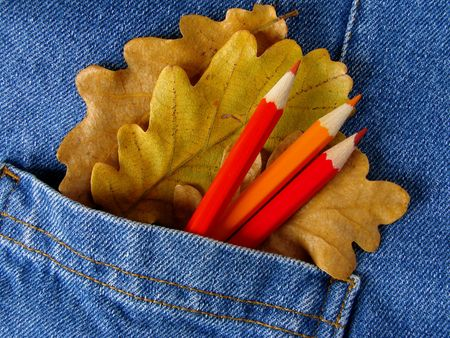 denim pocket with red pencils and dry oak leaves                                photo