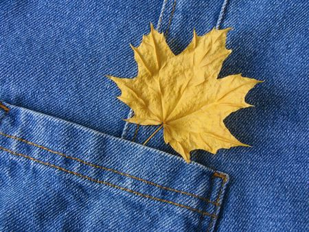 denim pocket with dry autumnal maple leaf                                photo