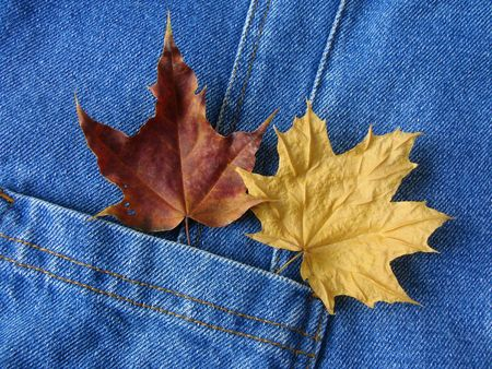 denim pocket with dry autumnal maple leaves photo