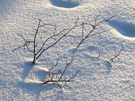 winter evening scene with bare branches sticking out of the snow                                photo