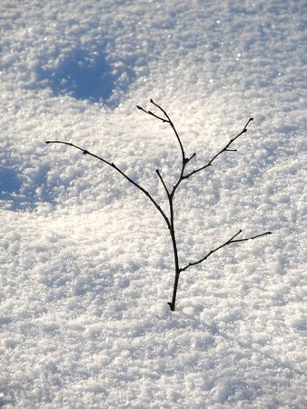 little tree in the snow                                 photo