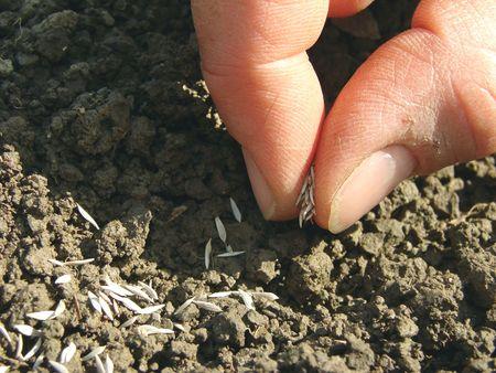 manos siembra de semillas en el suelo  Foto de archivo - 6980490