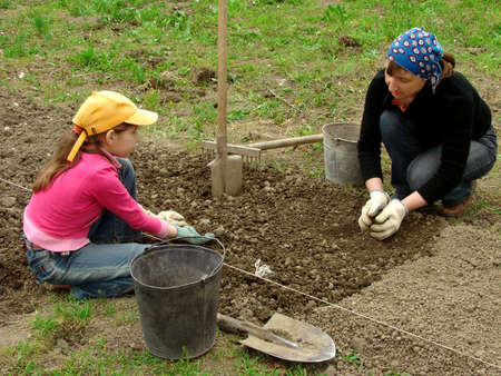 sowing: mother and daughter preparing vegetable bed for planting together