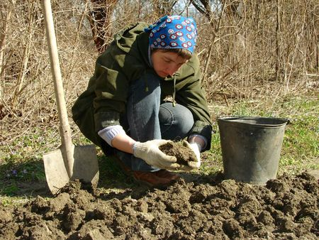 woman preparing vegetable bed for planting at the early spring                                 photo