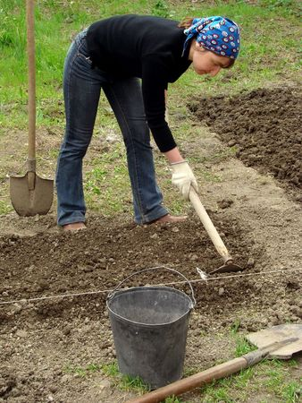 preparing vegetable bed for planting at the spring                                  Stock Photo