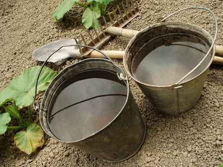 two buckets with water and gardening tools on the vegetable bed photo