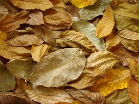 dry autumnal walnut leaves background                         photo