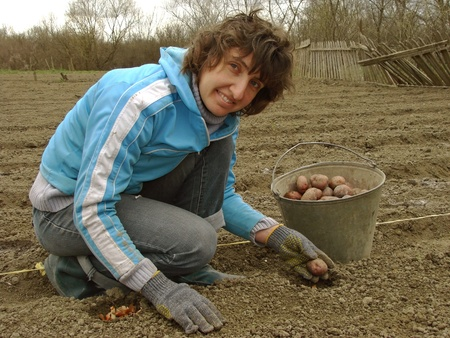 woman with bucket full of potato tubers for planting                                photo