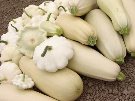 marrow squash: squashes harvest on the ground                                Stock Photo