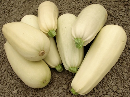 marrow squash: some fresh marrows on the ground