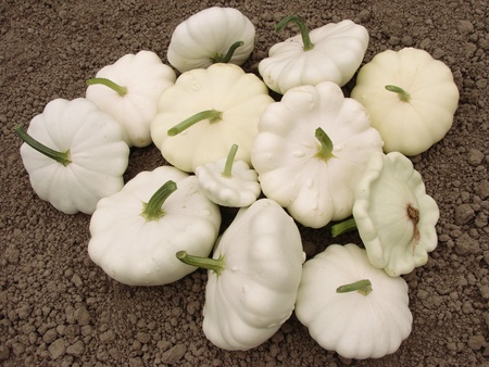 gourds: squashes harvest on the ground                                Stock Photo