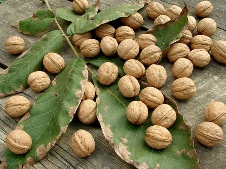 walnuts with leaves on old wooden background                           photo