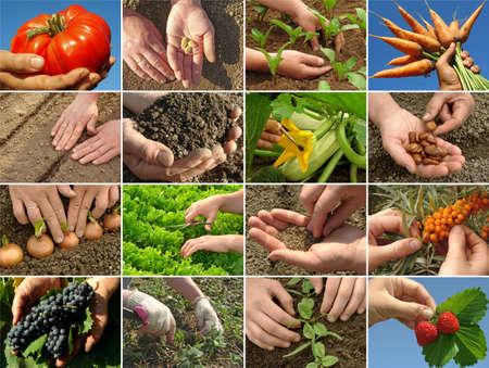 siembra: manos de los agricultores en la acción