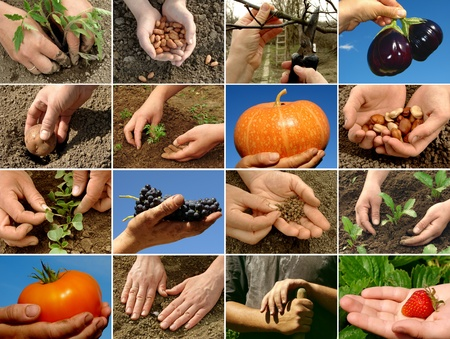 seed bed: farming collage