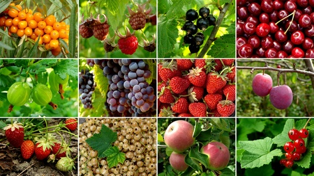 some organic fruits and berries collection photo