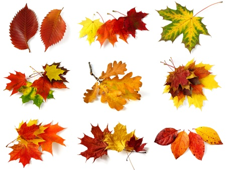 autumnal leaves collection on white photo